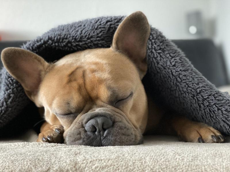 Corona-müde, geh zur Ruh' - Bild von Mylene2401 auf Pixabay
