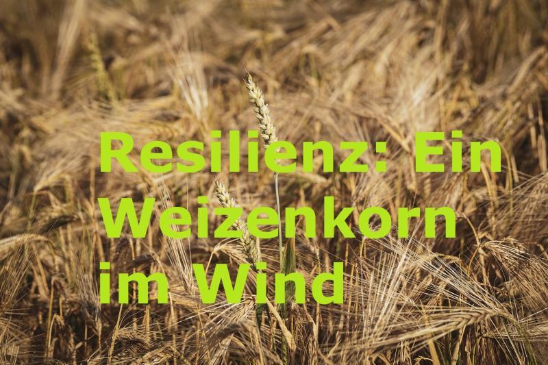 Resilienz: Ein Weizenkorn im Wind - Bild von suju-foto auf Pixabay